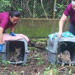 réintroduction des animaux dans leur espace naturel